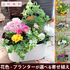 【送料無料】【寄せ植え】花色とプランターが選べる♪季節のおまかせカントリーガーデン【お花 ギフト 誕生日 プレゼント】