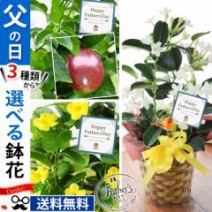 父の日 花 送料無料 選べる3種類の果樹 マダガスカルジャスミン、マンデビラ、パッションフルーツ