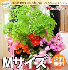【送料無料】季節のおまかせ花鉢とグリーンの寄せ入れ<Mサイズ> 誕生日プレゼント 女性 母 花 贈り物 お見舞い 新築祝い 送別会
