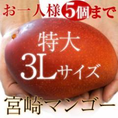 【特大サイズがあまっちゃう!?】宮崎県産『特大3Lマンゴー』1玉(450〜509g) ※常温