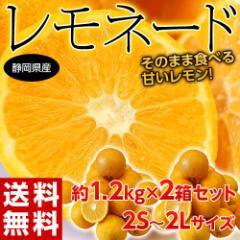 《送料無料》柑橘 静岡県産 「レモネード」2S〜2Lサイズ 約1.2kg×2箱セット ※常温 ☆