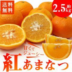 送料無料 柑橘 紅甘夏 約2.5kg あまなつ