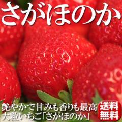 送料無料 フルーツ 苺 大粒いちご さがほのか 2パック イチゴ(gn)