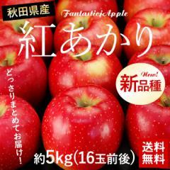 送料無料 フルーツ りんご 秋田県産 紅あかり 約5kg 16〜18玉 林檎 リンゴ(gn)