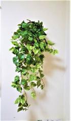 【人工観葉植物】【ポトス壁掛け】【触媒加工】【送料無料】