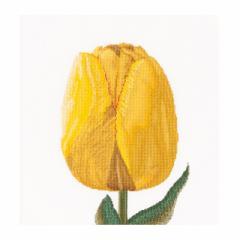 Thea Gouverneur クロスステッチ刺繍キットNo.522 「Yellow hybrid tulip」(黄色いダーウィンハイブリッド チューリップ 花)  オランダ