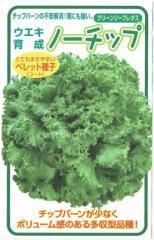 横浜植木 レタス ノーチップ Lコート種子約100粒【郵送対応】