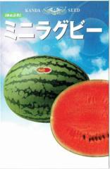 神田育種農場 スイカ ミニラグビー 約11粒【郵送対応】