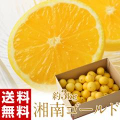 柑橘 神奈川・小田原産『湘南ゴールド』 約3kg 無選別 ※常温・送料無料☆