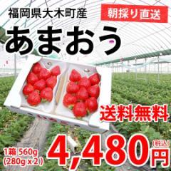送料無料 朝採り完熟 博多あまおう デラックス1箱560g(280g×2) 福岡県大木町産 あまおう いちご 苺 イチゴ