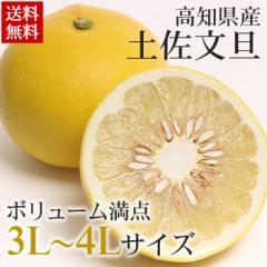 文旦 送料無料 高知県産 土佐文旦 約2.5kg 大玉 ぶんたん 柑橘(gn)