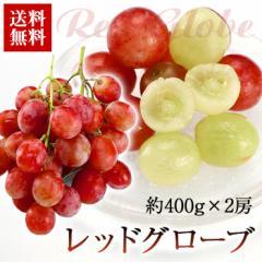 送料無料 フルーツ 葡萄 レッドグローブ 2房 ぶどう ブドウ アメリカ(gn)