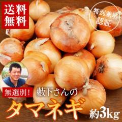 送料無料 産地直送 和歌山県産 藪下さんの特別栽培タマネギ約3kg サイズ不選別 たまねぎ 玉ねぎ 玉葱