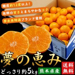 送料無料 フルーツ 熊本県産 夢の恵みかん 約5kg どっさり 蜜柑 ミカン