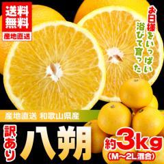 送料無料 訳あり 八朔 約3kg 和歌山県産 産地直送 はっさく 旬 フルーツ ハッサク ワケあり