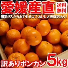 みかん 送料無料 愛媛から産地直送 訳ありポンカン 約5kg  わけあり ワケアリ 訳アリ