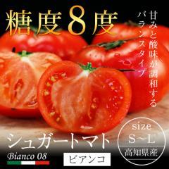 高知県産 シュガートマト ビアンコ S〜Lサイズ 約10玉前後 送料無料 フルーツ 果物