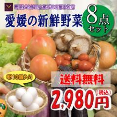 福袋愛媛のお楽しみ野菜セットお試し版8品卵入り 送料無料!!