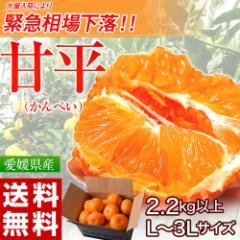 ≪送料無料≫愛媛県産 大玉『甘平(かんぺい)』 バラ詰め 2.2kg以上 3Lサイズ ※常温