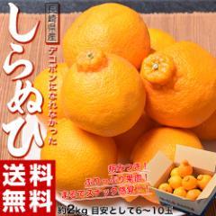 柑橘 長崎県産「デコポンになれなかったしらぬひ」約2kg 目安として6〜10玉 ※常温・送料無料 ☆