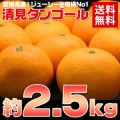 送料無料 愛媛 清見タンゴール約2.5kg みかん オレンジ フルーツ 旬 果物(gn)