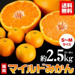 送料無料 フルーツ みかん 福岡県産 マイルドみかん 約2.5kg  S・Mサイズ 25〜30玉 ブランド 蜜柑(gn)