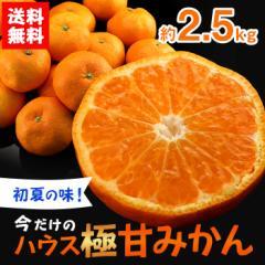 フルーツ 詰め合わせ ギフト ギフトランキング 送料無料 ハウス極甘みかん 13〜22玉 約2.5kg ハウス ミカン(gn)