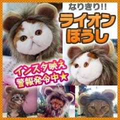 ペット用ウィッグ ♪ 耳付き ライオン たてがみ【全3サイズ】ペット用かつら インスタ映え 撮影用