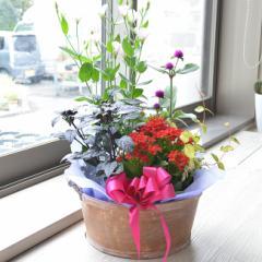 店長おまかせ 季節のカゴアレンジ Mサイズ プレゼント 花 贈り物