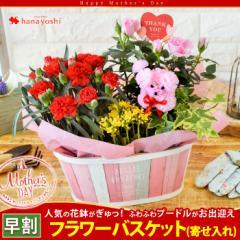 母の日 花 ギフト 2018 送料無料★カーネーション、ミニバラなど人気の花鉢がぎゅっ!ふわふわプードルが笑顔をお届け