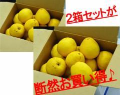 【緊急スポット!!】柑橘 愛媛県産 小玉『宇和ゴールド』優・秀 S〜L 約3kg×2箱 ※常温・送料無料