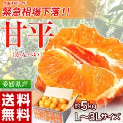 《送料無料》愛媛県産 大玉『甘平(かんぺい)』 バラ詰め 約5kg 3Lサイズ ※常温 ☆