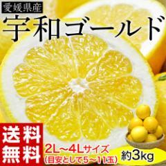 柑橘 愛媛県産 『宇和ゴールド』 優・秀 2L〜4L 約3kg(目安として5〜11玉) ※常温・送料無料 ○