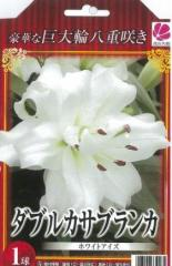 花の大和 球根 豪華な巨大輪八重咲き ダブルカサブランカ ホワイトアイズ1球(801-170728-017)