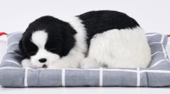 置物 座布団の上で眠るリアルなワンちゃん 大サイズ (ボーダーコリー)