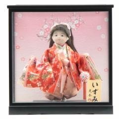 雛人形 ケース入り童人形【いずみ】[幅36cm][it-1068] 雛祭り