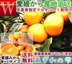 産地直送 西宇和の雫 温州みかん 約5kg 訳あり 愛媛県産 マルチシート栽培の新鮮なえひめ蜜柑!