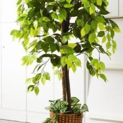 お手軽観葉植物(人工観葉植物) ベンジャミン
