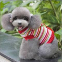 ドッグウエア Autumn Cloth 秋 冬 犬用服 ペット用品 Colorful stripe with hoodie sweater ストライプカラー セーター