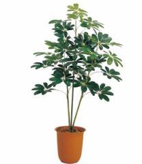 造花 フラワー 観葉植物  120cm カポックツリー [LETR7200]【フェイク グリーン インテリア 人口観葉植物】