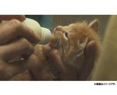 送料無料有/[DVD]/犬と猫と人間と/邦画/KKJS-96