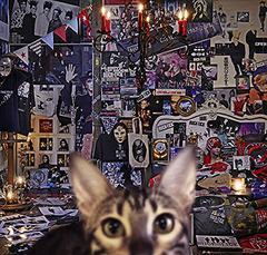 送料無料/[CD]/BUCK-TICK/CATALOGUE 1987-2016 [4SHM-CD+DVD/初回限定盤 B]/VIZL-1239