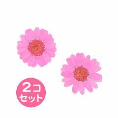 濃ピンク/ガーベラ風押し花2個セット