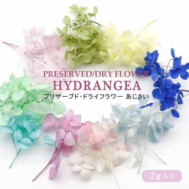 紫陽花 の ドライ フラワー