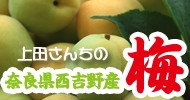 上田さんちの梅特集