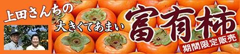上田さんちの富有柿特集
