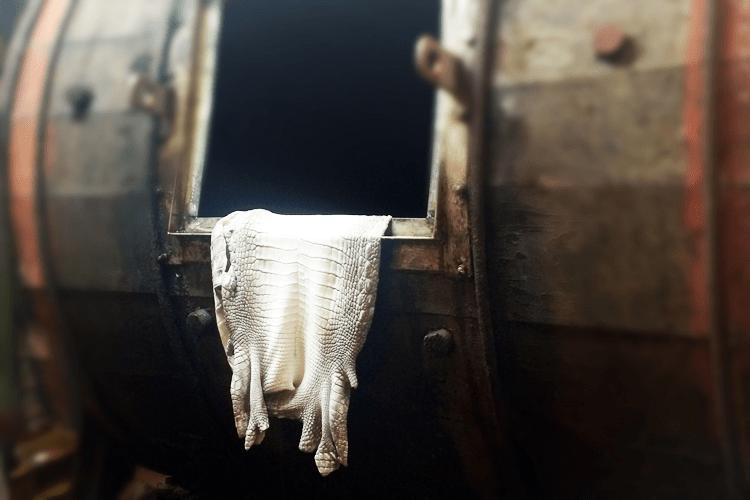 クロコダイル革を鞣した画像