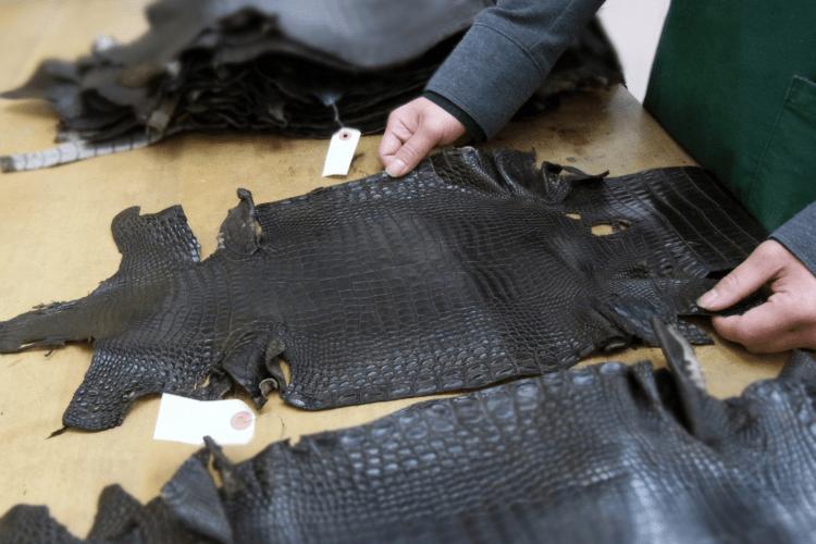 クロコダイル革の検品