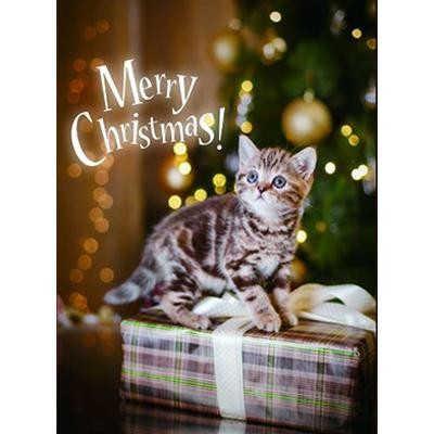 LEDキャンバス CAT メリークリスマス 763564
