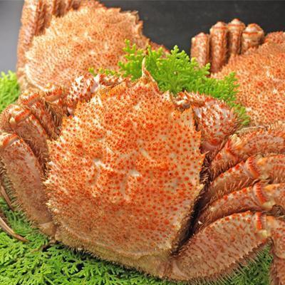 北海道産の毛蟹をボイル 毛ガニ 約750gx1尾 特...